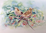 Young Thrushes
